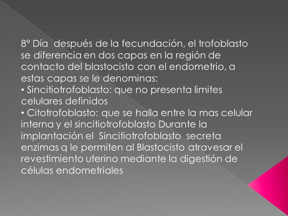 8° Día después de la fecundación, el trofoblasto se diferencia en dos capas en la región de contacto del blastocisto con el endometrio, a estas capas se le denominas: