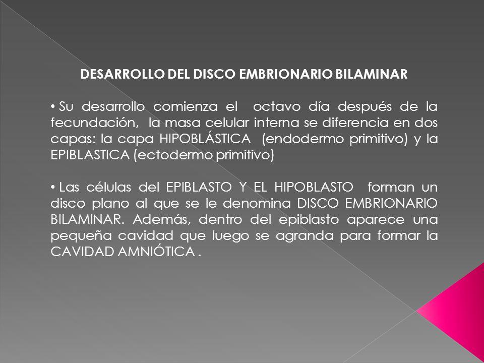 DESARROLLO DEL DISCO EMBRIONARIO BILAMINAR