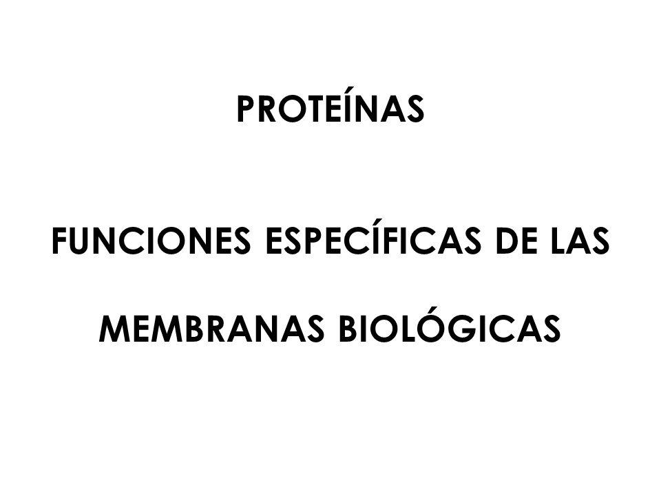 FUNCIONES ESPECÍFICAS DE LAS