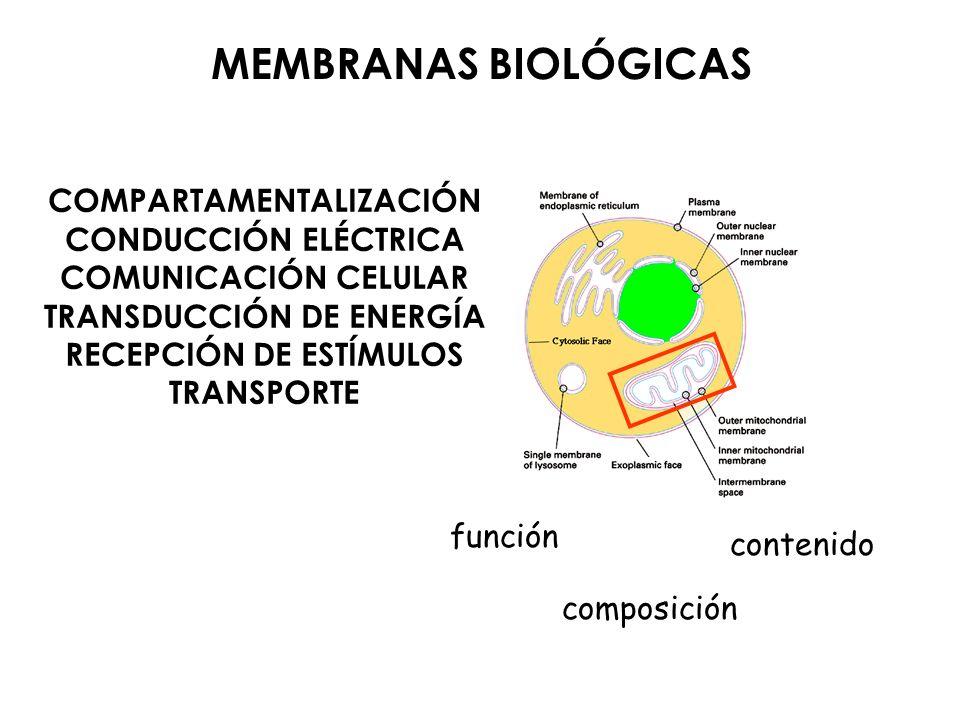 COMPARTAMENTALIZACIÓN TRANSDUCCIÓN DE ENERGÍA RECEPCIÓN DE ESTÍMULOS
