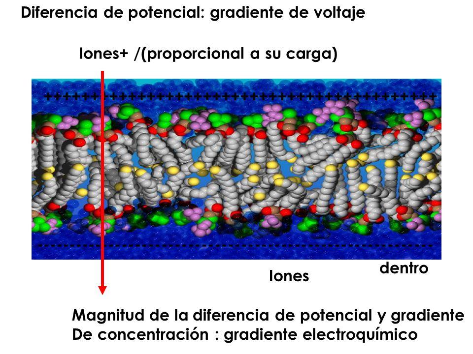 Diferencia de potencial: gradiente de voltaje