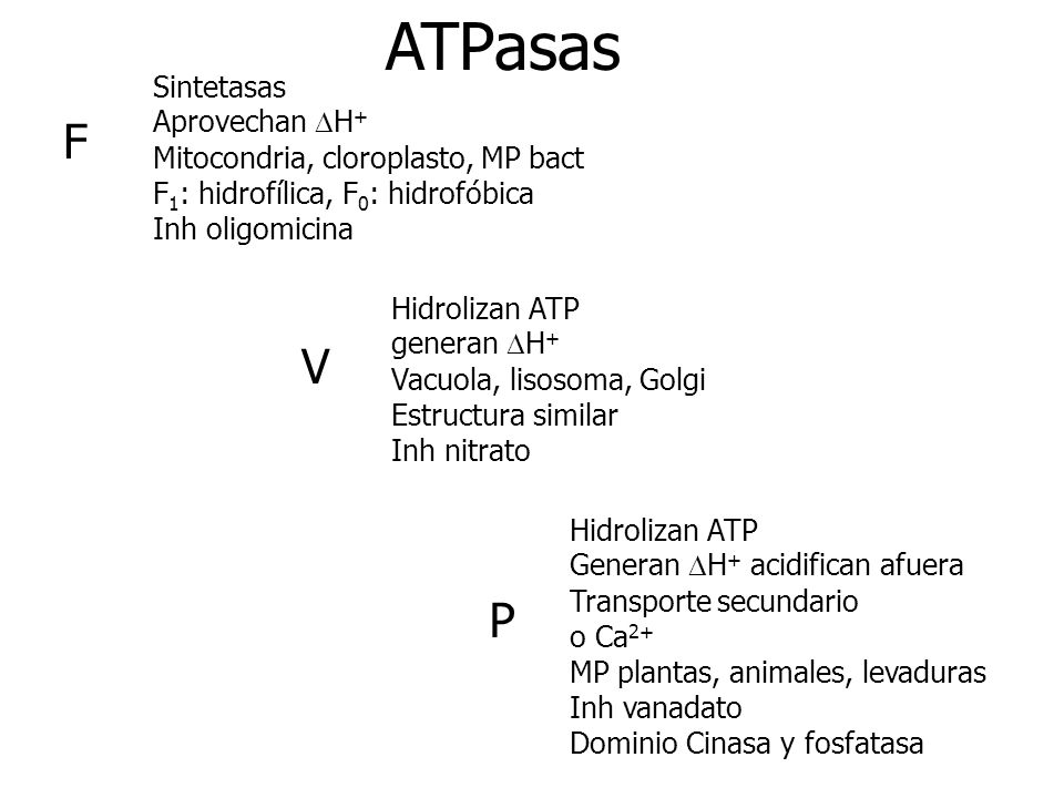 ATPasas F V P Sintetasas Aprovechan DH+