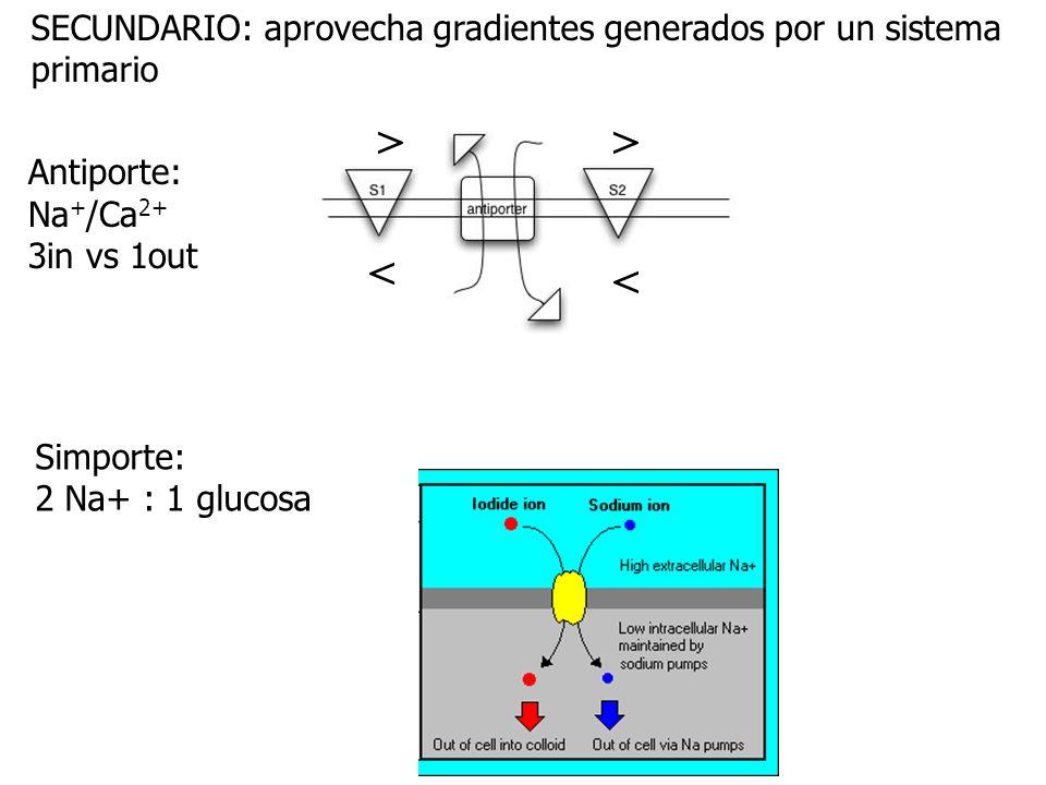 > < SECUNDARIO: aprovecha gradientes generados por un sistema