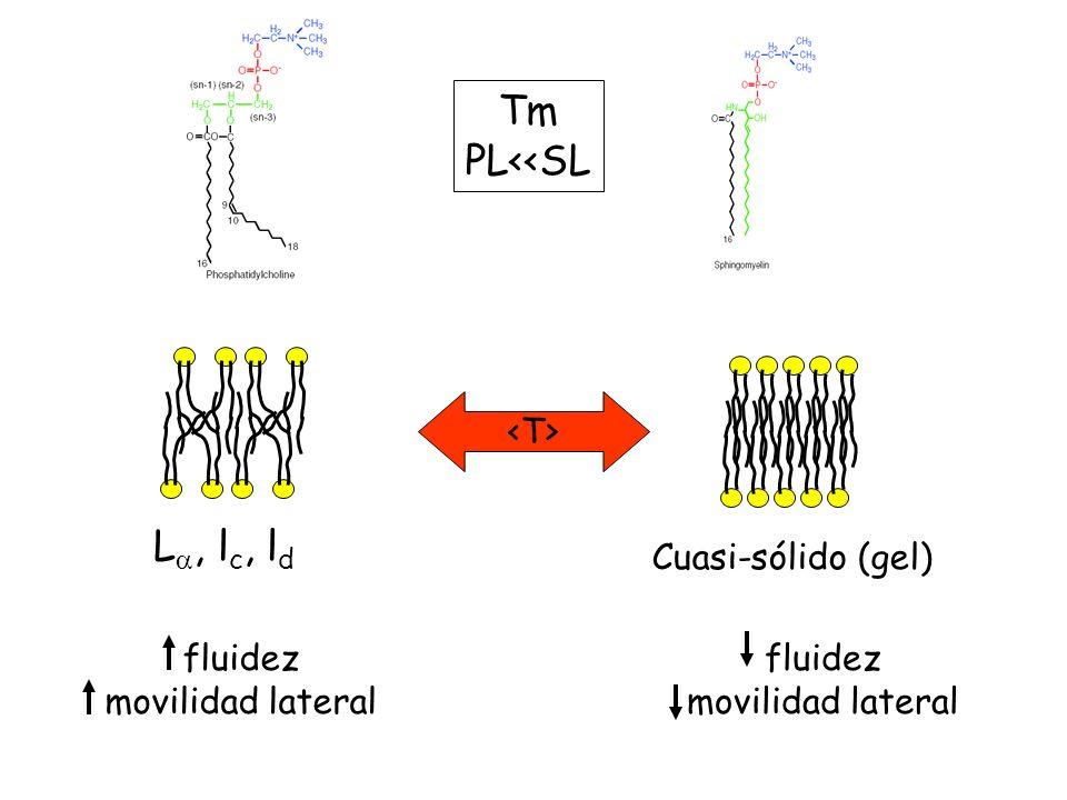 Tm PL<<SL La, lc, ld fluidez movilidad lateral