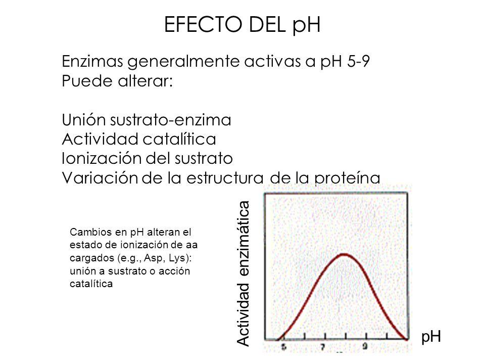 EFECTO DEL pH Enzimas generalmente activas a pH 5-9 Puede alterar: