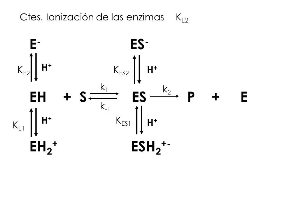 E- ES- EH + S ES P + E EH2+ ESH2+- Ctes. Ionización de las enzimas KE2