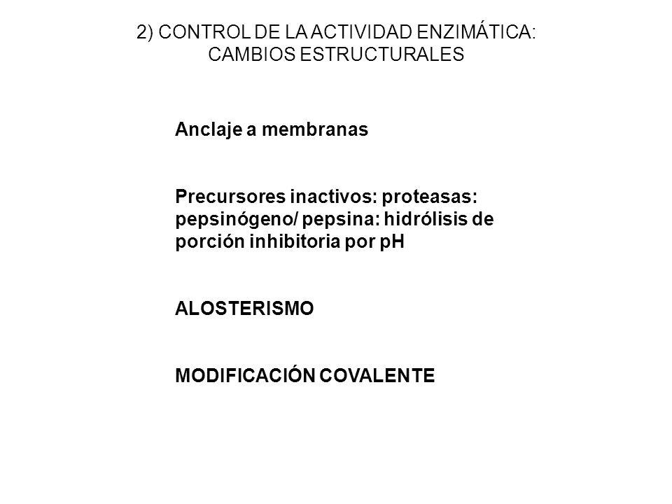 2) CONTROL DE LA ACTIVIDAD ENZIMÁTICA: CAMBIOS ESTRUCTURALES