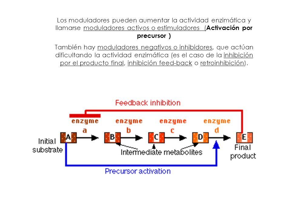 Los moduladores pueden aumentar la actividad enzimática y llamarse moduladores activos o estimuladores (Activación por precursor )