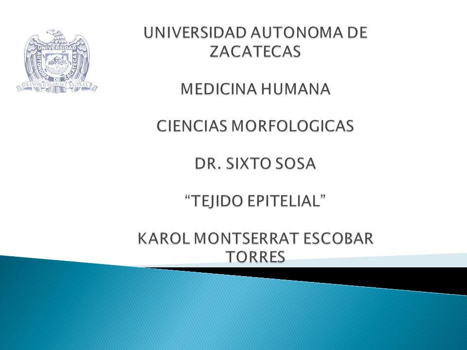 UNIVERSIDAD AUTONOMA DE ZACATECAS MEDICINA HUMANA CIENCIAS MORFOLOGICAS DR.