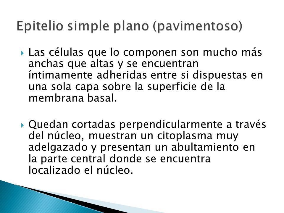 Epitelio simple plano (pavimentoso)