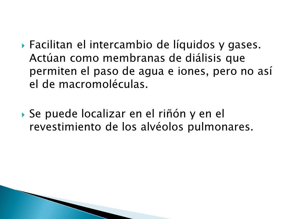 Facilitan el intercambio de líquidos y gases