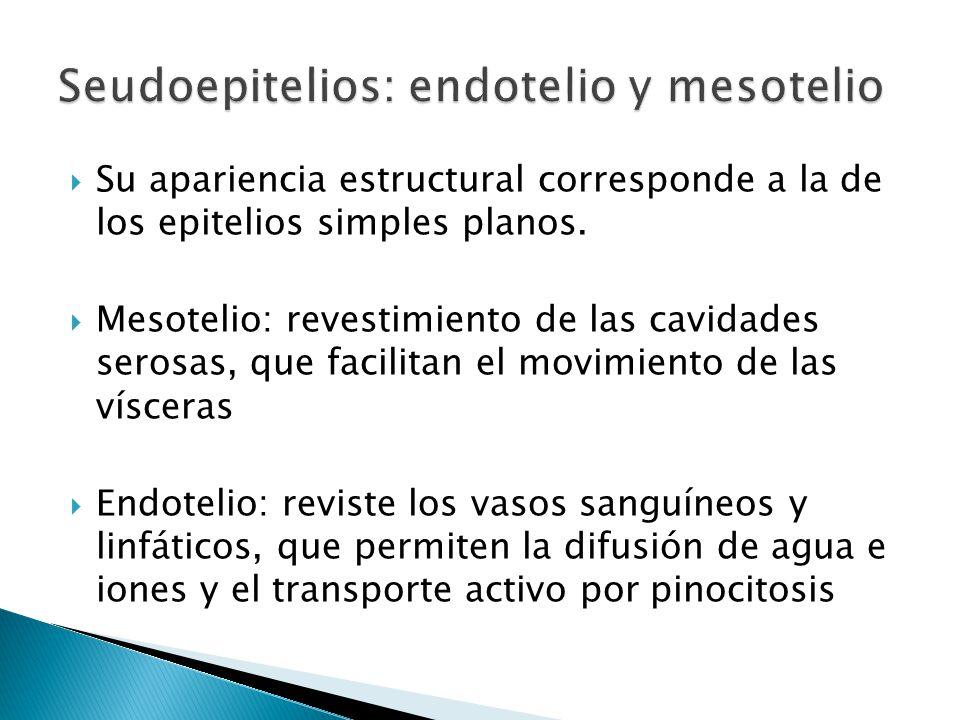 Seudoepitelios: endotelio y mesotelio