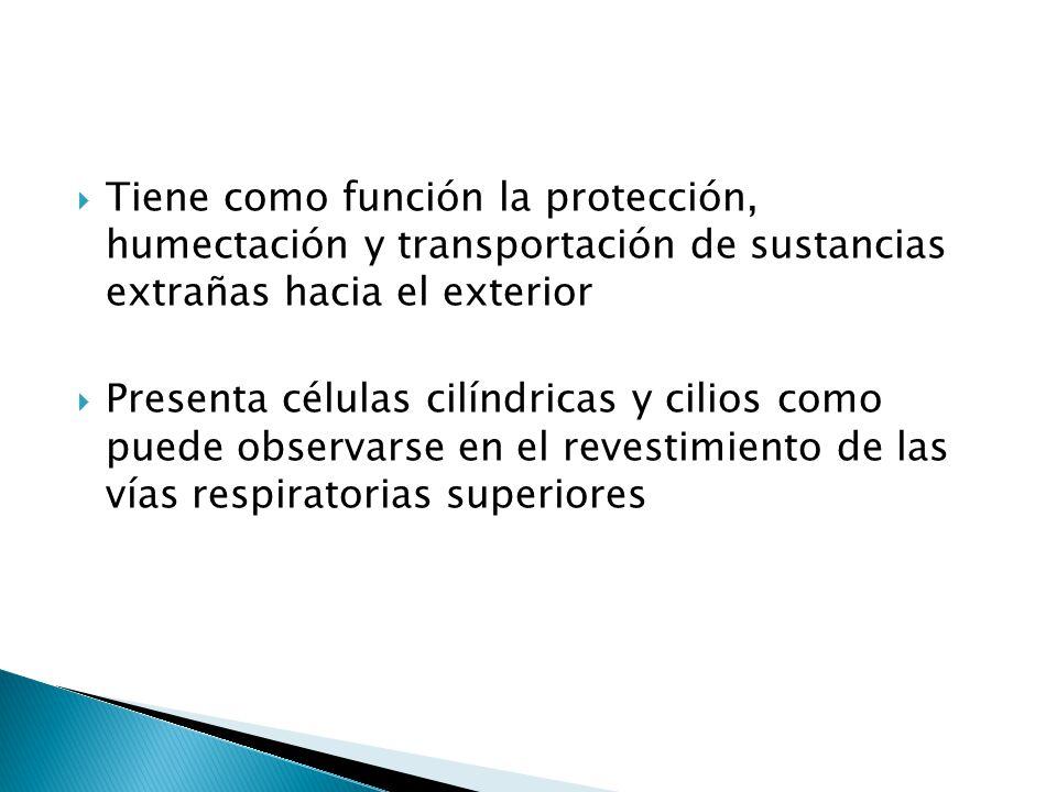 Tiene como función la protección, humectación y transportación de sustancias extrañas hacia el exterior