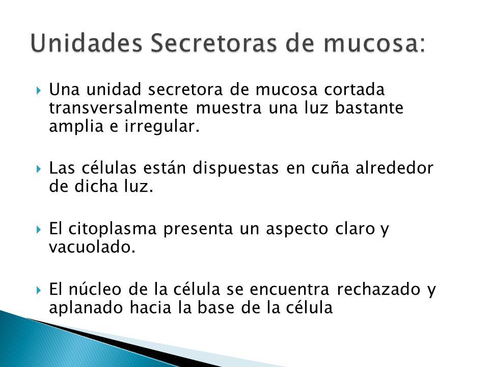 Unidades Secretoras de mucosa: