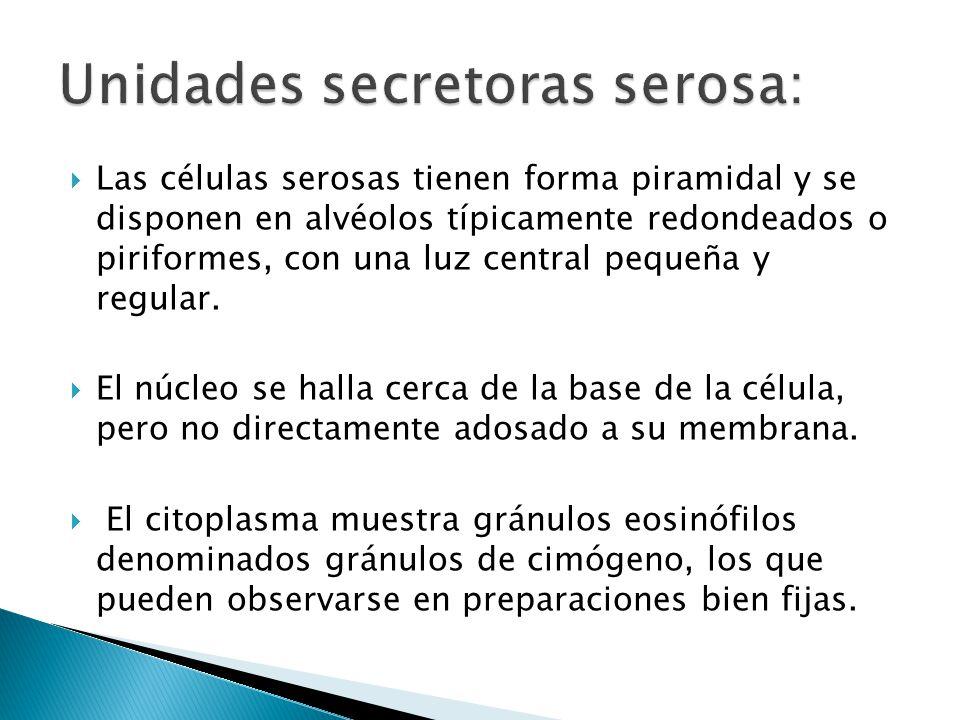 Unidades secretoras serosa:
