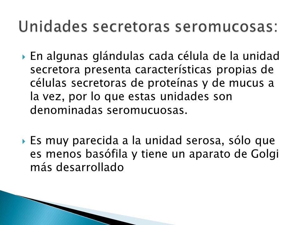 Unidades secretoras seromucosas: