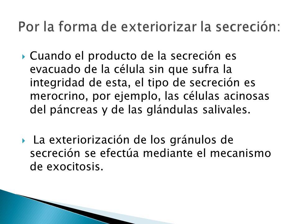 Por la forma de exteriorizar la secreción: