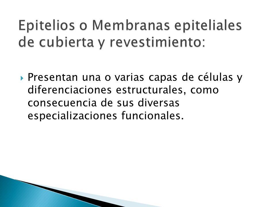 Epitelios o Membranas epiteliales de cubierta y revestimiento: