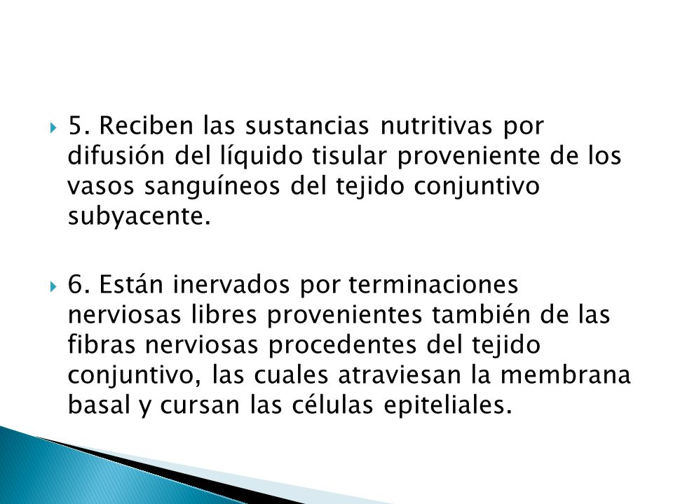 5. Reciben las sustancias nutritivas por difusión del líquido tisular proveniente de los vasos sanguíneos del tejido conjuntivo subyacente.