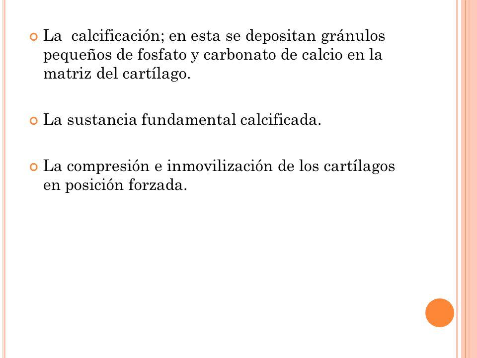 La calcificación; en esta se depositan gránulos pequeños de fosfato y carbonato de calcio en la matriz del cartílago.