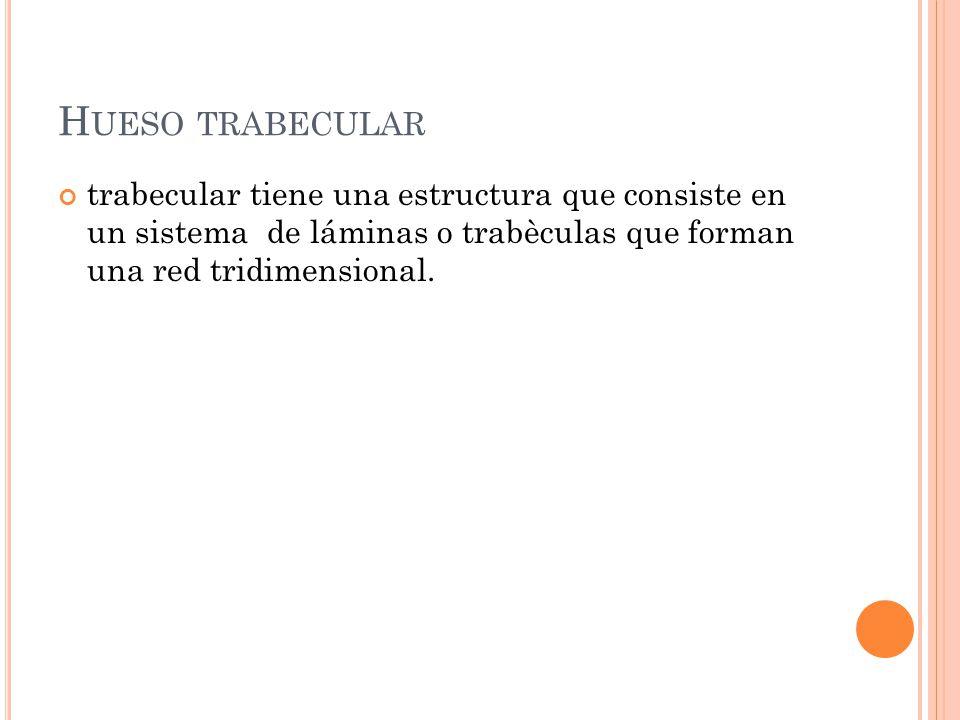 Hueso trabecular trabecular tiene una estructura que consiste en un sistema de láminas o trabèculas que forman una red tridimensional.