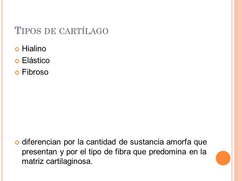 Tipos de cartílago Hialino Elástico Fibroso
