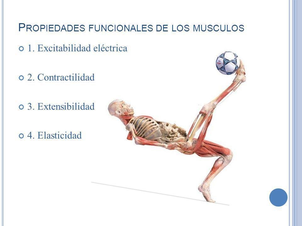 Propiedades funcionales de los musculos