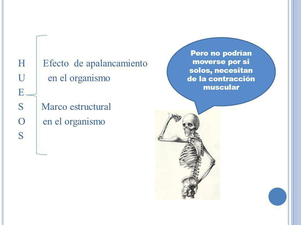 H Efecto de apalancamiento U en el organismo E S Marco estructural O en el organismo S