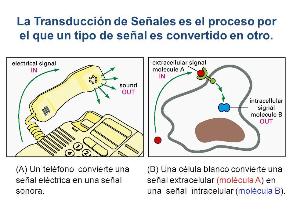 La Transducción de Señales es el proceso por el que un tipo de señal es convertido en otro.