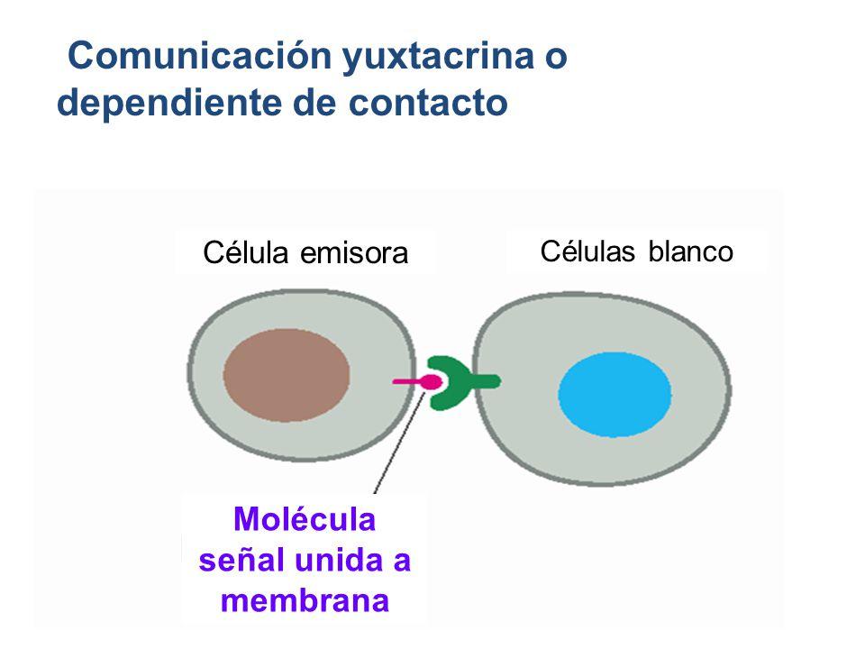 Molécula señal unida a membrana