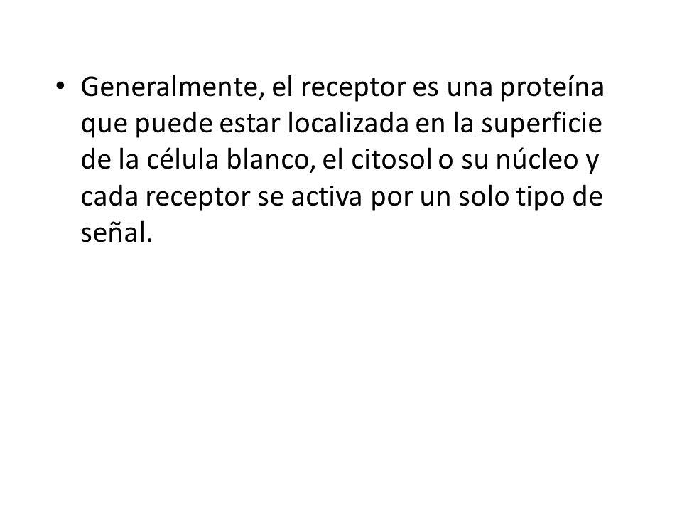 Generalmente, el receptor es una proteína que puede estar localizada en la superficie de la célula blanco, el citosol o su núcleo y cada receptor se activa por un solo tipo de señal.