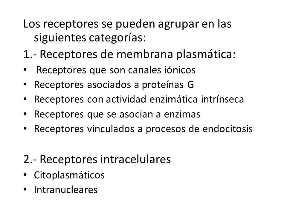 Los receptores se pueden agrupar en las siguientes categorías: