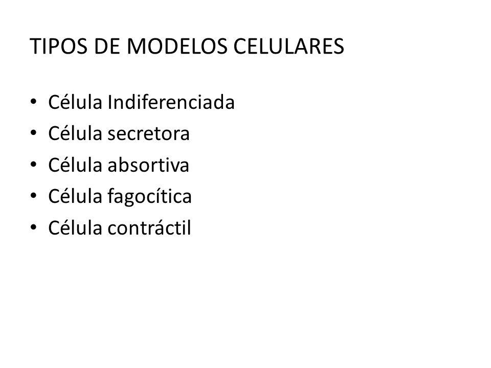 TIPOS DE MODELOS CELULARES