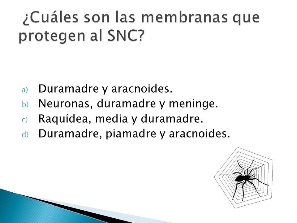 ¿Cuáles son las membranas que protegen al SNC