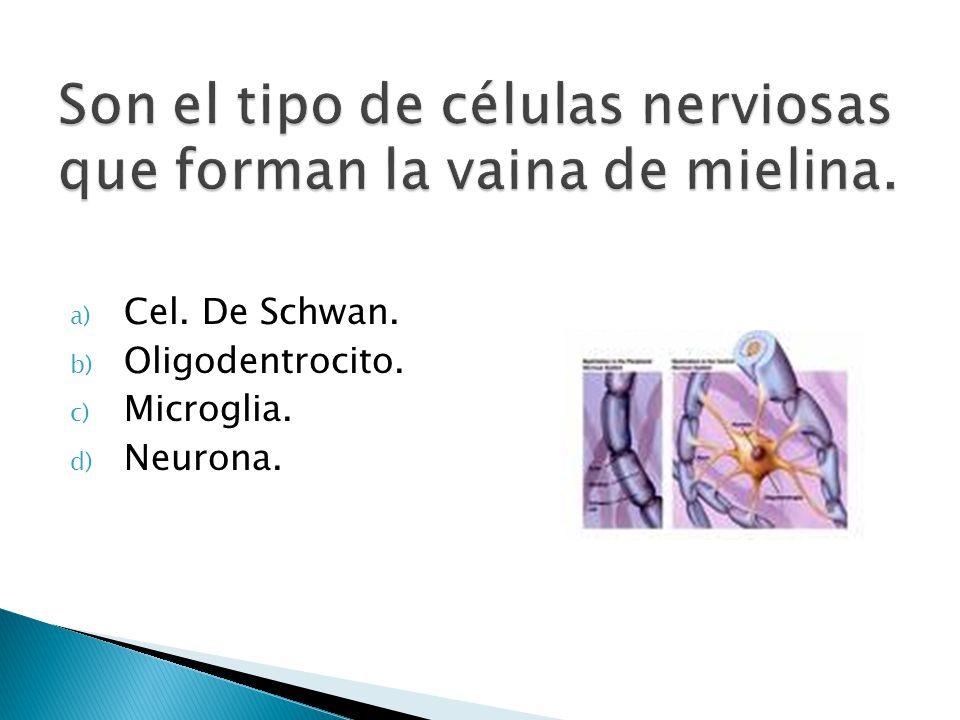 Son el tipo de células nerviosas que forman la vaina de mielina.
