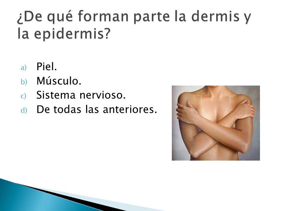 ¿De qué forman parte la dermis y la epidermis