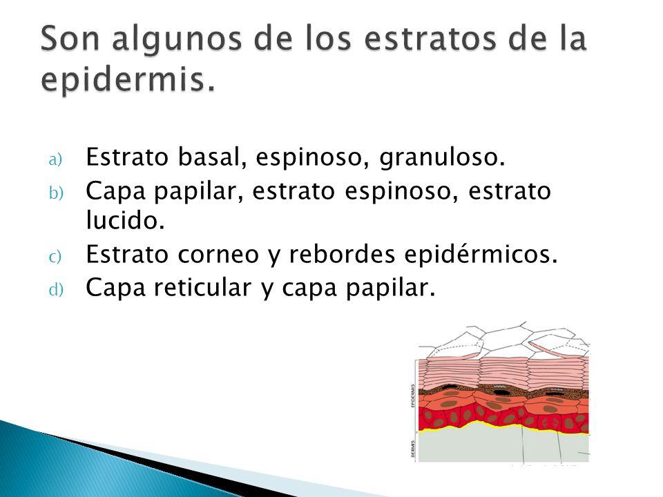 Son algunos de los estratos de la epidermis.