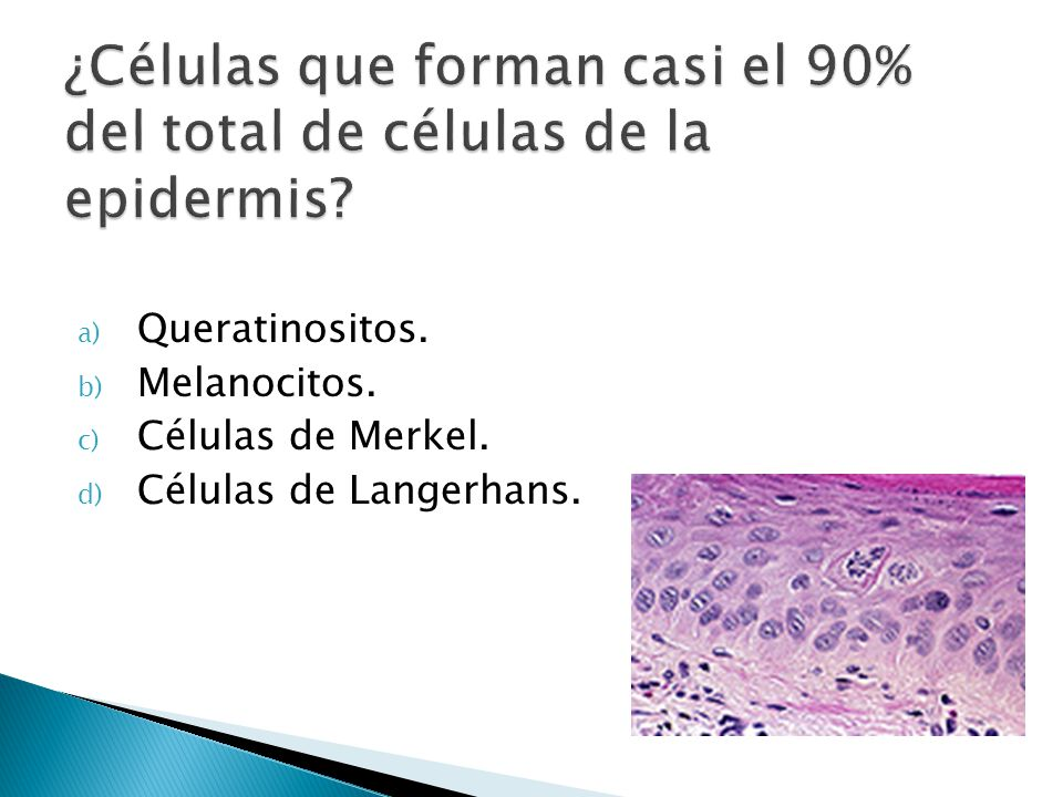 ¿Células que forman casi el 90% del total de células de la epidermis