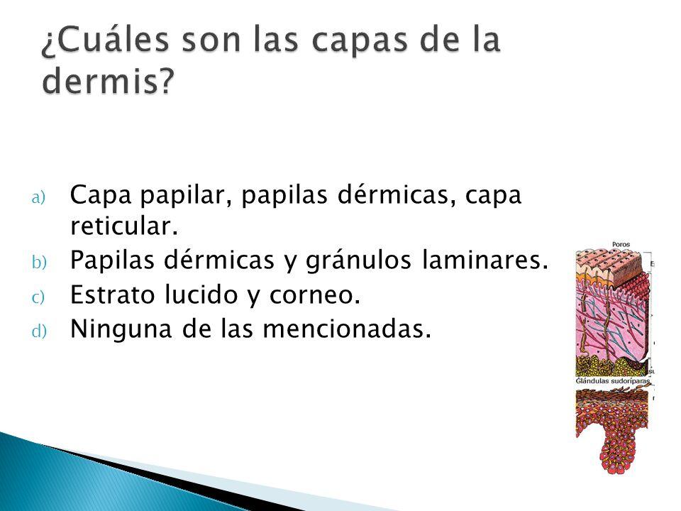 ¿Cuáles son las capas de la dermis