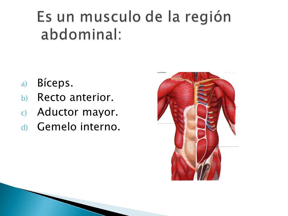 Es un musculo de la región abdominal: