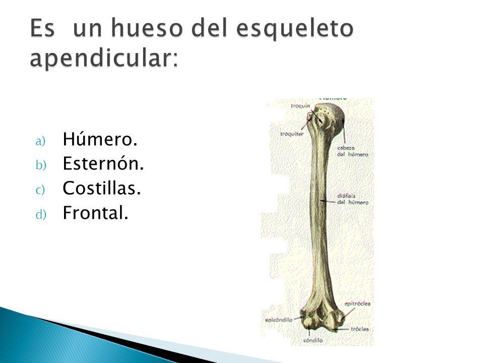 Es un hueso del esqueleto apendicular: