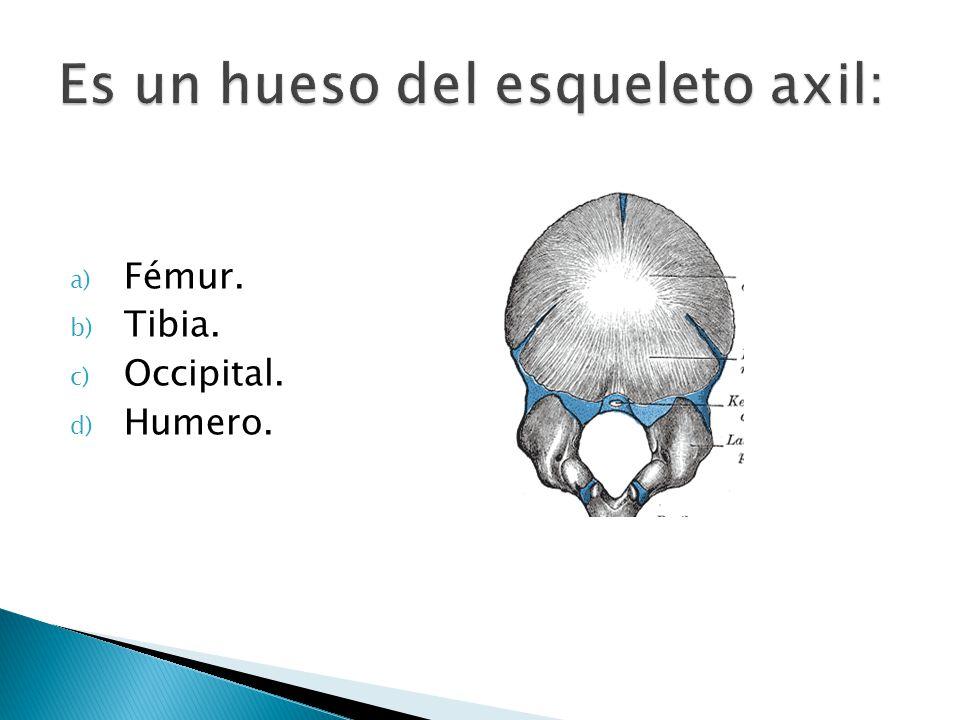 Es un hueso del esqueleto axil: