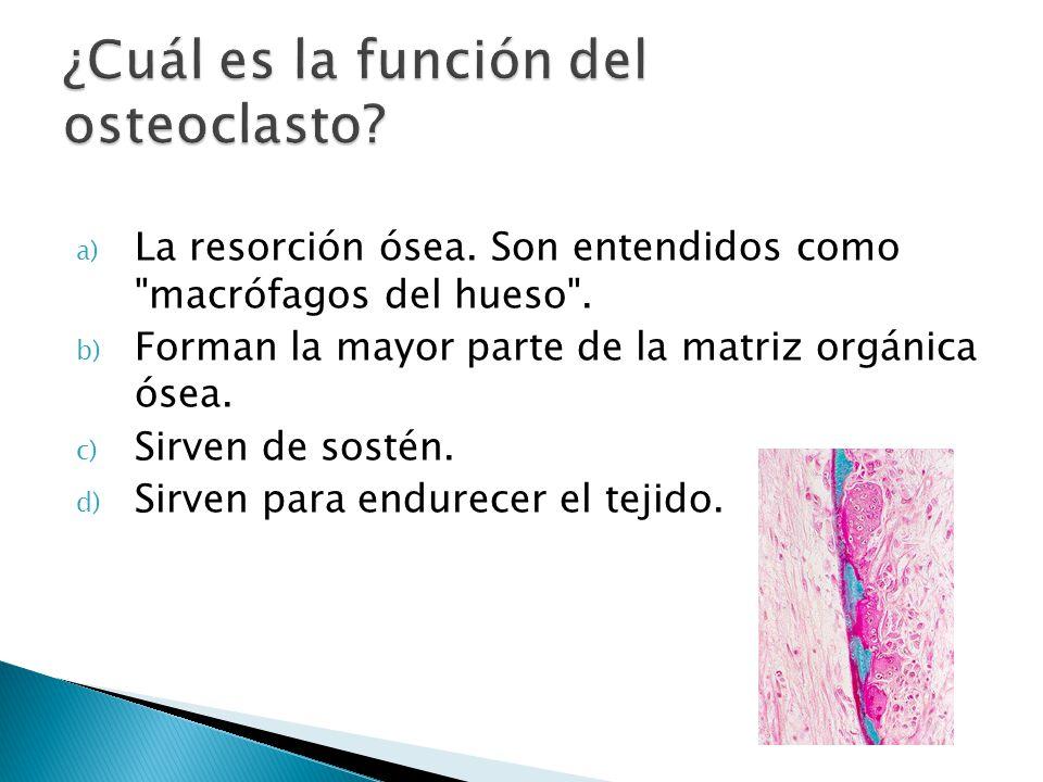 ¿Cuál es la función del osteoclasto