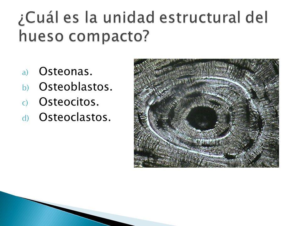 ¿Cuál es la unidad estructural del hueso compacto