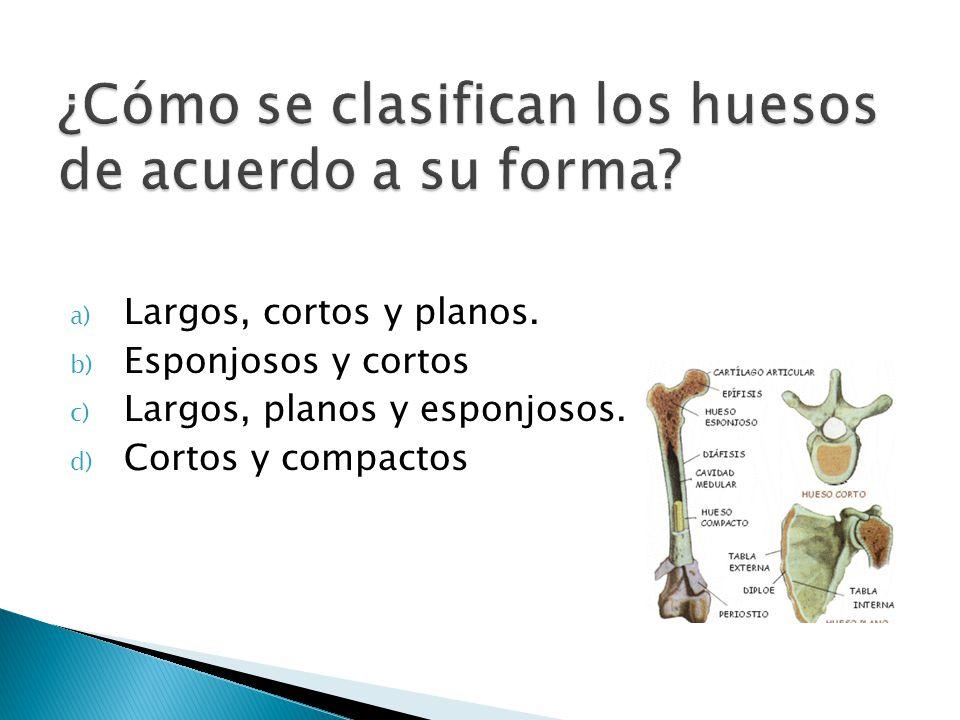 ¿Cómo se clasifican los huesos de acuerdo a su forma