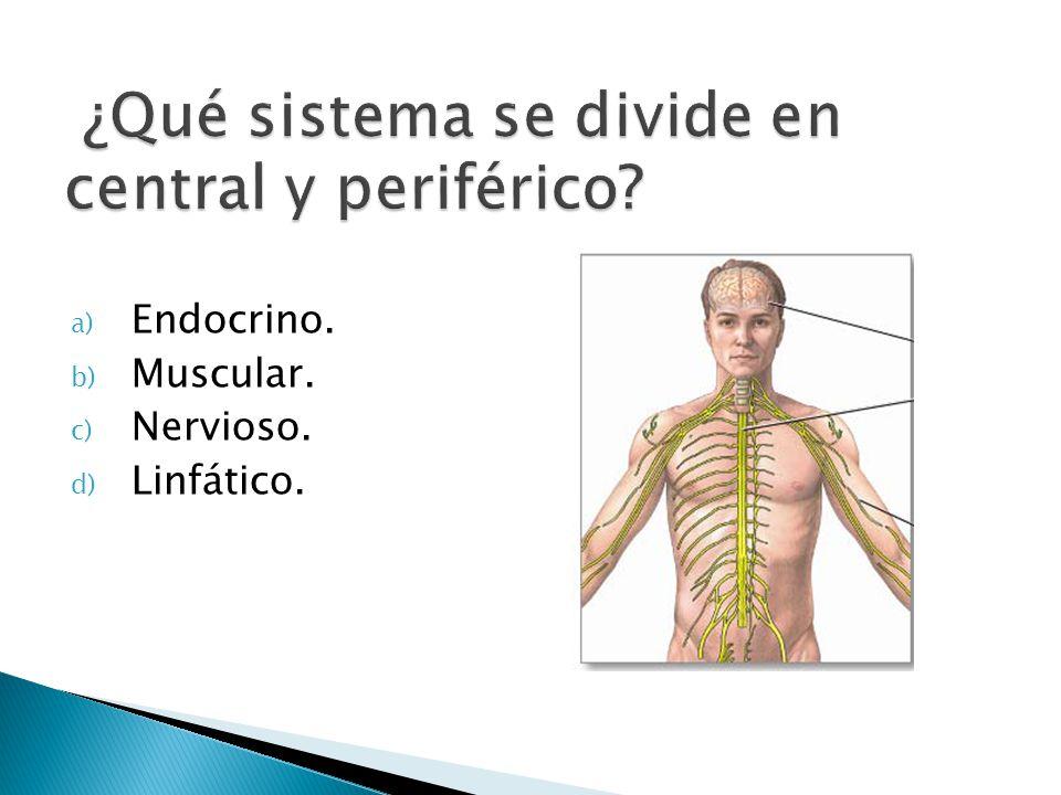 ¿Qué sistema se divide en central y periférico