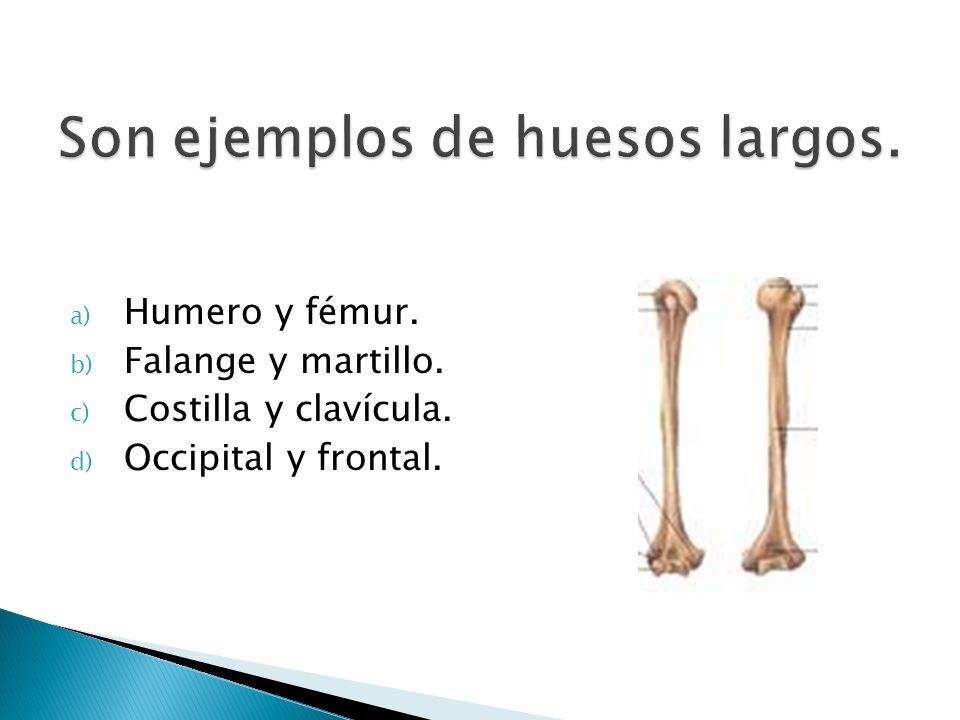 Son ejemplos de huesos largos.