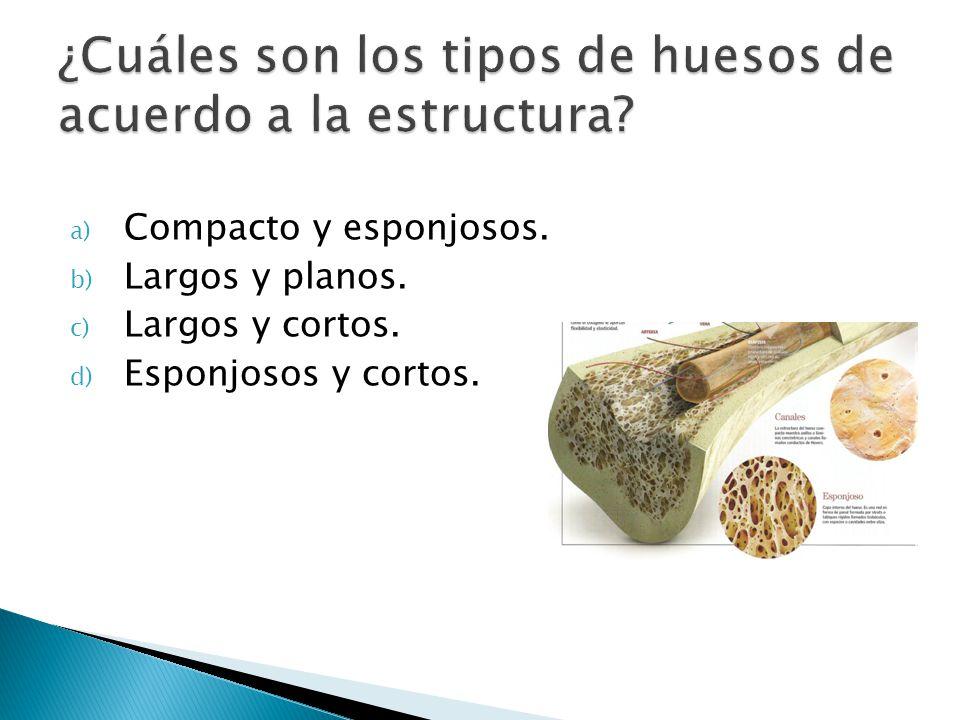 ¿Cuáles son los tipos de huesos de acuerdo a la estructura