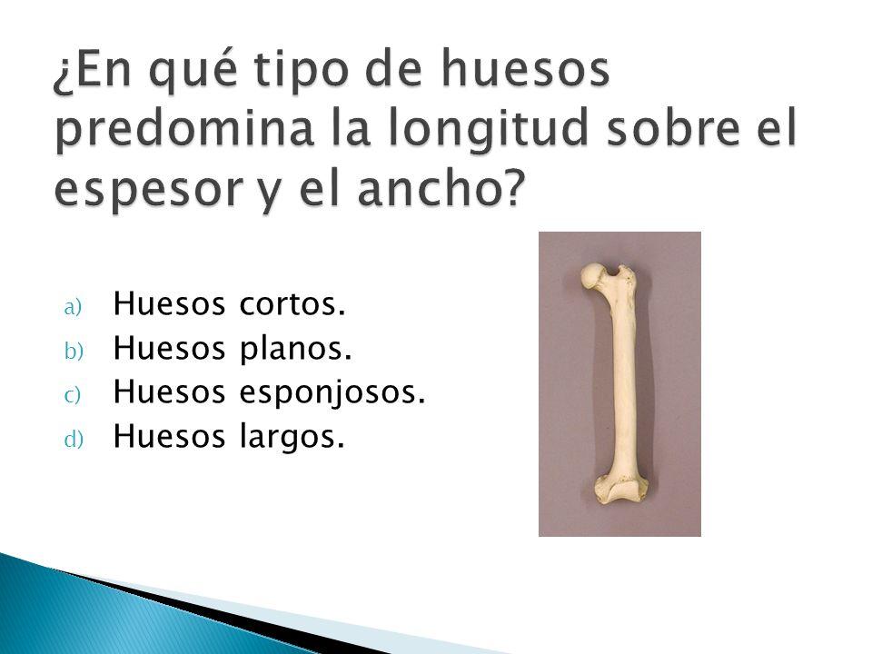 ¿En qué tipo de huesos predomina la longitud sobre el espesor y el ancho