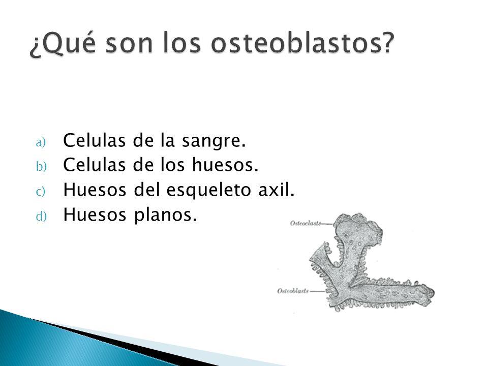 ¿Qué son los osteoblastos